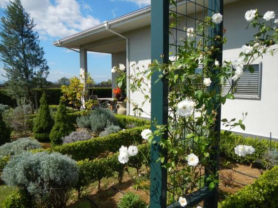 2015年10月 埼玉県行田市 さきたま霊園 墓域 植栽 白いバラ 薔薇 お墓 墓石DSCN7195