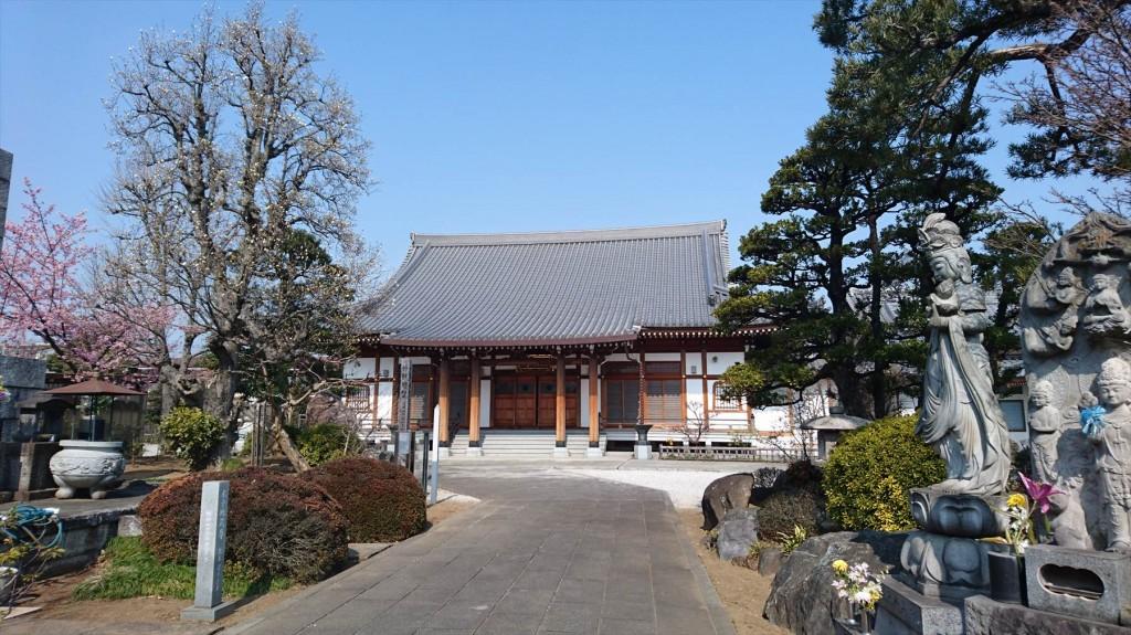 2016年3月 埼玉県上尾市瓦葺のお寺 楞厳寺の河津桜が綺麗でした。DSC_0282