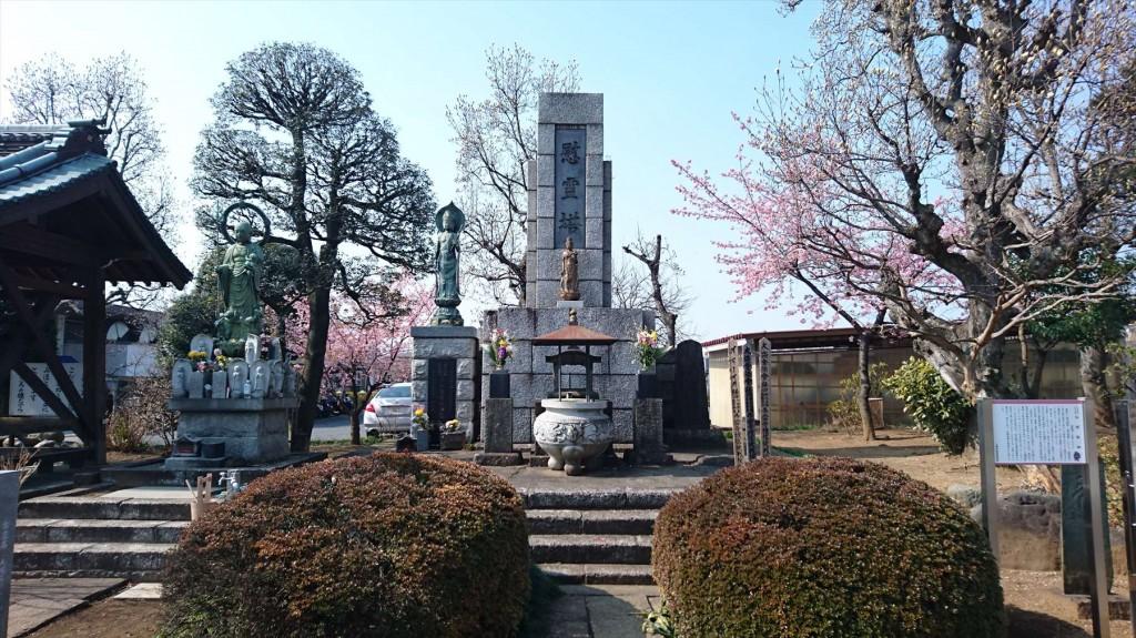 2016年3月 埼玉県上尾市瓦葺のお寺 楞厳寺の河津桜が綺麗でした。DSC_0283