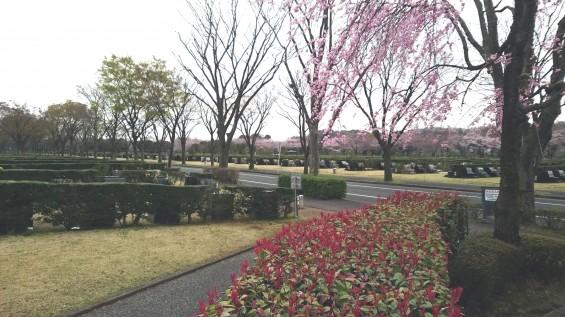 DSC_02272016年4月8日 さいたま市営思い出の里の桜と花 改葬