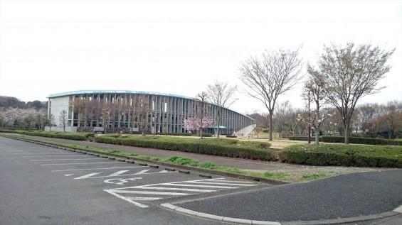 DSC_02242016年4月8日 さいたま市営思い出の里の桜と花 改葬