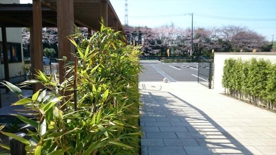 DSC_02062016年4月8日 桶川霊園の桜と花