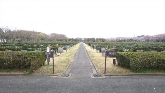 DSC_02322016年4月8日 さいたま市営思い出の里の桜と花 改葬