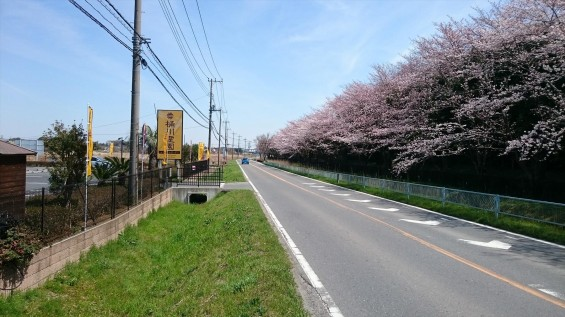 DSC_02132016年4月8日 桶川霊園の桜と花