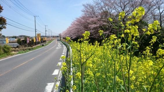 DSC_02172016年4月8日 桶川霊園の桜と花
