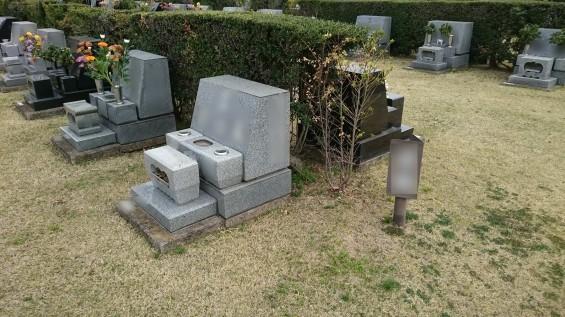 DSC_02312016年4月8日 さいたま市営思い出の里の桜と花 改葬