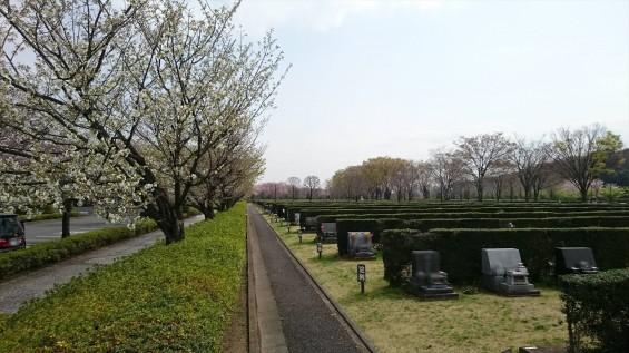 DSC_02212016年4月8日 さいたま市営思い出の里の桜と花 改葬