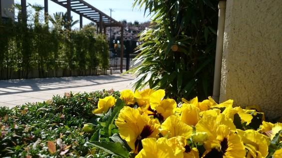 DSC_02092016年4月8日 桶川霊園の桜と花