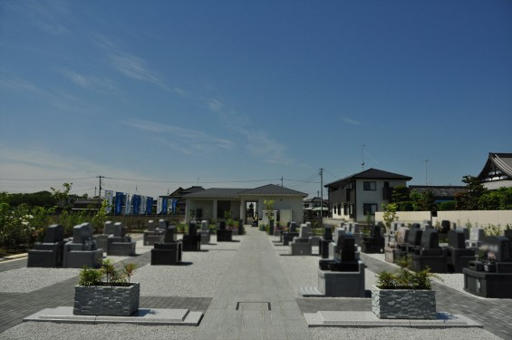 埼玉県の霊園 久喜清久霊園の白いシャクナゲが綺麗ですDSC_7237