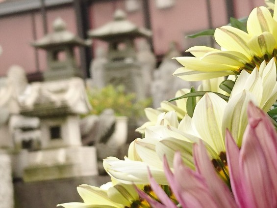 2016年5月 埼玉県の石材店 株式会社大塚の展示場に咲く花001