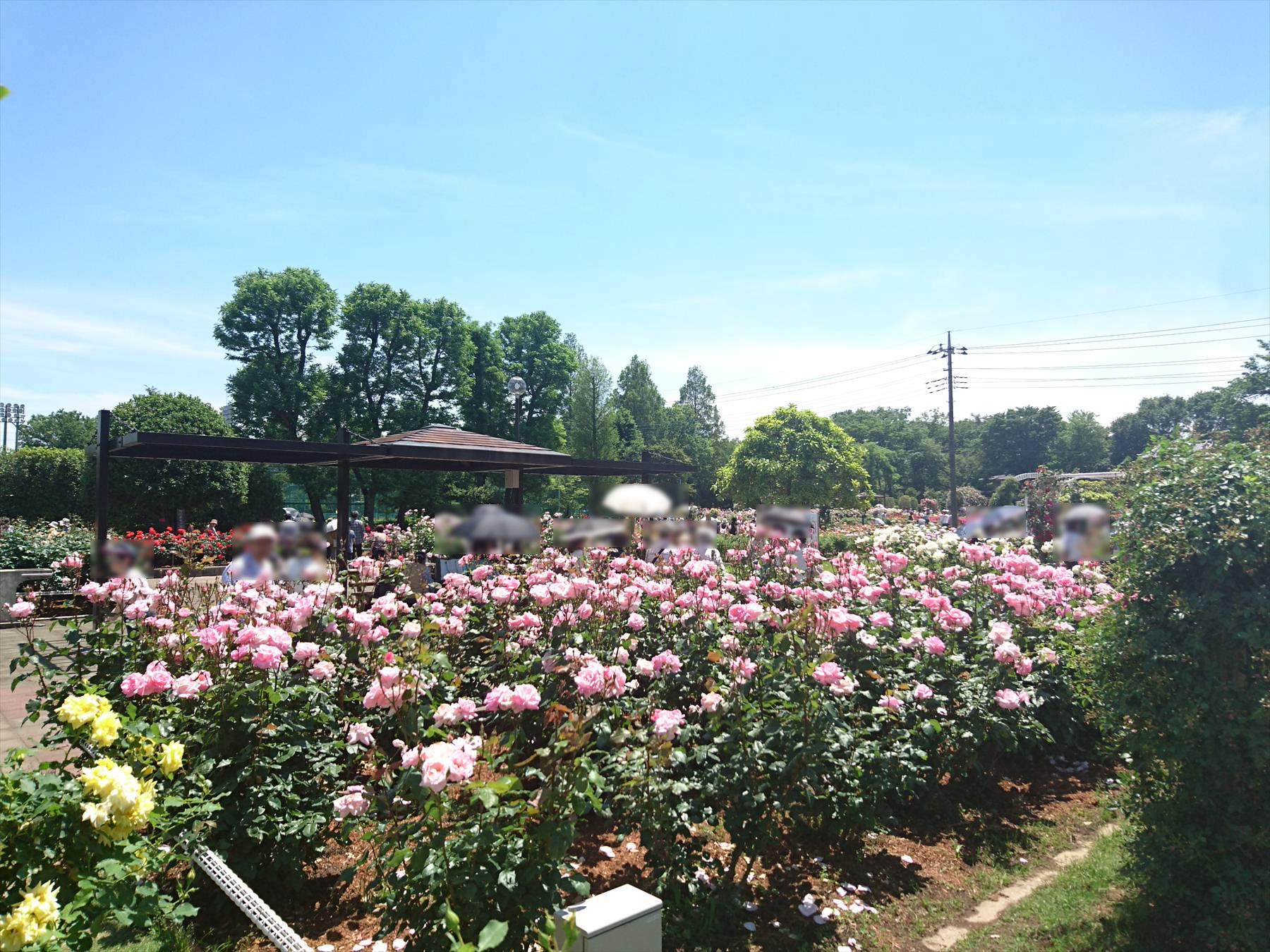 ・埼玉県伊奈町の2016バラまつり開催中です | 霊園とお墓のはなし