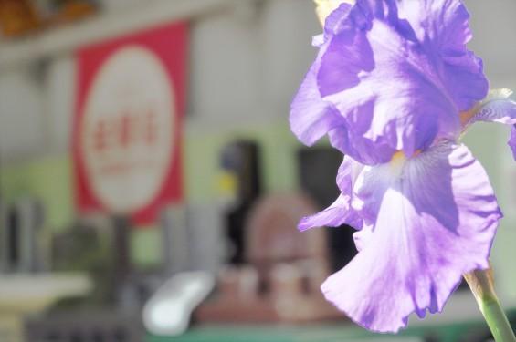 2016年5月7日 石材店の初夏の花 大塚の展示場に咲いていましたDSC_6850+