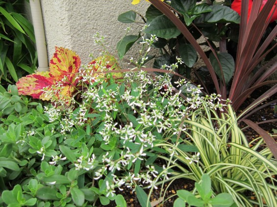 2016年6月 埼玉県桶川市の桶川霊園、花壇の植え替えをしました002_1