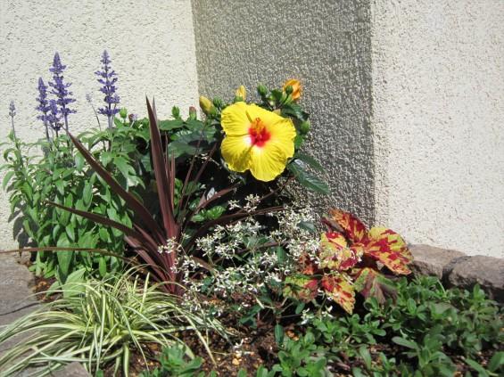 2016年6月 埼玉県桶川市の桶川霊園、花壇の植え替えをしました002