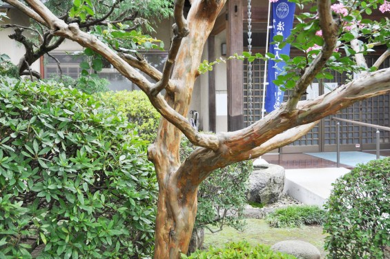 2016年7月20日 埼玉県上尾市の寺院、相頓寺のサルスベリが綺麗でしたDSC_8096