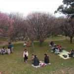 埼玉県越谷市 梅まつり 梅林公園17-03-05-14-59-05-719_photo