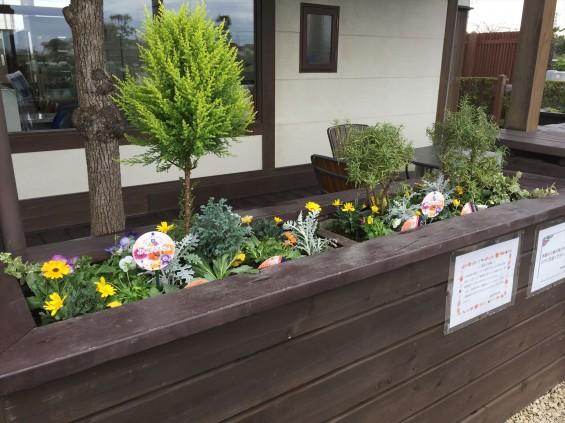 201611 埼玉県の霊園 鴻巣霊園 植栽とお花の植え替えIMG_0080