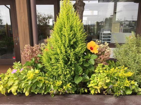201611 埼玉県の霊園 鴻巣霊園 植栽とお花の植え替えIMG_0054