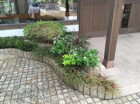201611 埼玉県の霊園 鴻巣霊園 植栽とお花の植え替えIMG_0062