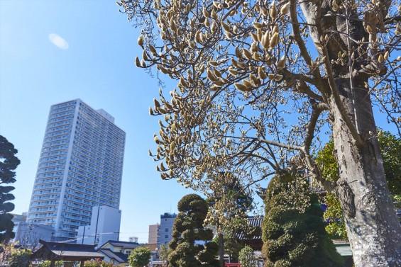 埼玉県上尾市の寺院 遍照院_DSC0052