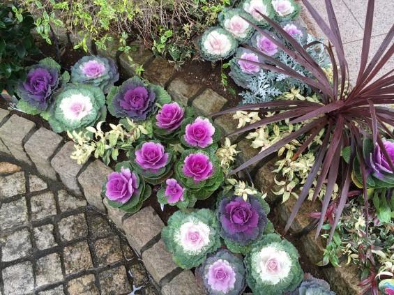 201611 埼玉県の霊園 鴻巣霊園 植栽とお花の植え替えIMG_0093