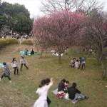 埼玉県越谷市 梅まつり 梅林公園17-03-05-14-59-23-213_photo