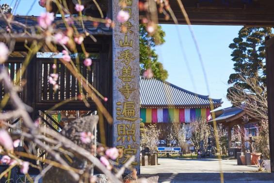 埼玉県上尾市の寺院 遍照院_DSC0036