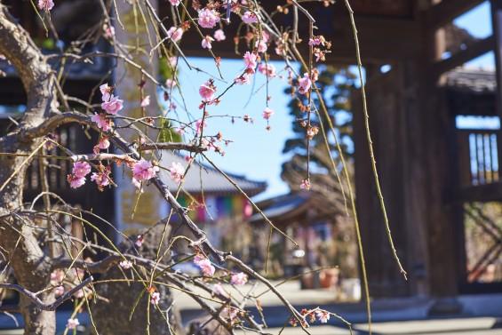 埼玉県上尾市の寺院 遍照院_DSC0034