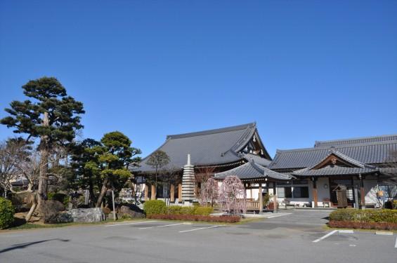 埼玉県上尾市の寺院 20160309 楞厳寺の枝垂れ梅DSC_0860