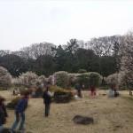 埼玉県越谷市 梅まつり 梅林公園17-03-05-15-09-29-181_photo