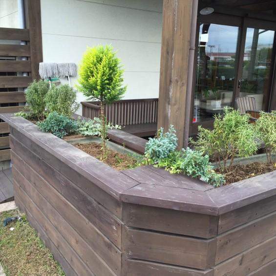 201611 埼玉県の霊園 鴻巣霊園 植栽とお花の植え替えIMG_0071