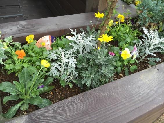 201611 埼玉県の霊園 鴻巣霊園 植栽とお花の植え替えIMG_0090