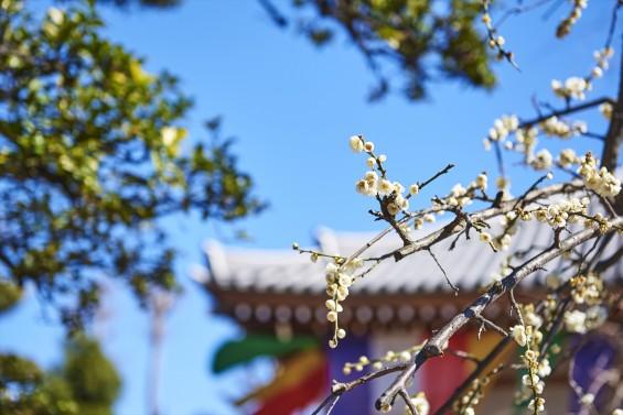 埼玉県上尾市の寺院 遍照院_DSC0054