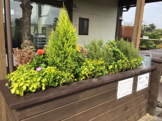 201611 埼玉県の霊園 鴻巣霊園 植栽とお花の植え替えIMG_0056