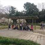 埼玉県越谷市 梅まつり 梅林公園17-03-05-15-02-33-760_photo