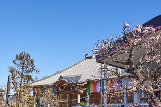 埼玉県上尾市の寺院 遍照院_DSC0060