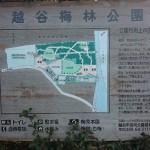 埼玉県越谷市 梅まつり 梅林公園DSC_5917