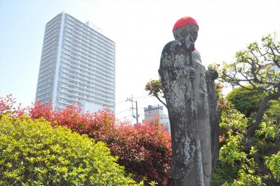 2017年4月14日 上尾市仏教会顧問会総会 今年の会場は遍照院でした 境内の様子 タワーマンションとお地蔵様 DSC_1575