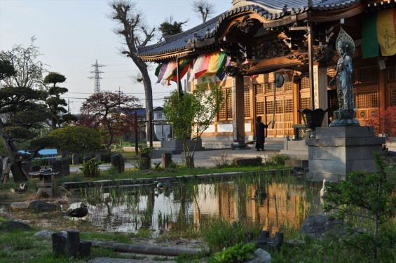 2017年4月14日 上尾市仏教会顧問会総会 今年の会場は遍照院でした 水鳥 鴨DSC_1776