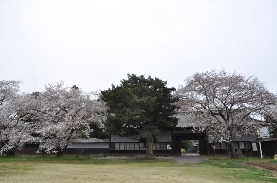 2017年4月 埼玉県熊谷市  幕末の志士 根岸友山 根岸家長屋門 満開の桜DSC_1251