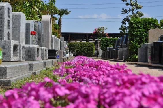 2017年4月19日鴻巣霊園 お墓 墓地 樹木葬 花壇 ガーデンDSC_1872