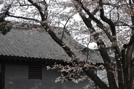 2017年4月 埼玉県熊谷市  幕末の志士 根岸友山 根岸家長屋門 満開の桜DSC_1254