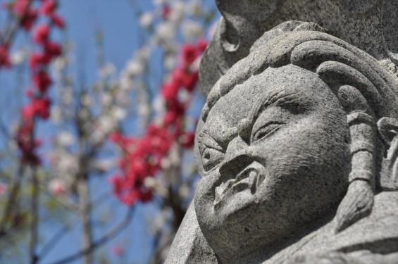 2017年4月14日 上尾市仏教会顧問会総会 今年の会場は遍照院でした 境内の様子 DSC_1592