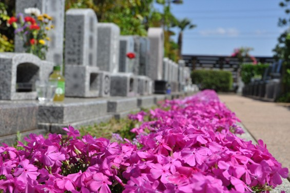 2017年4月19日鴻巣霊園 お墓 墓地 樹木葬 花壇 ガーデンDSC_1874
